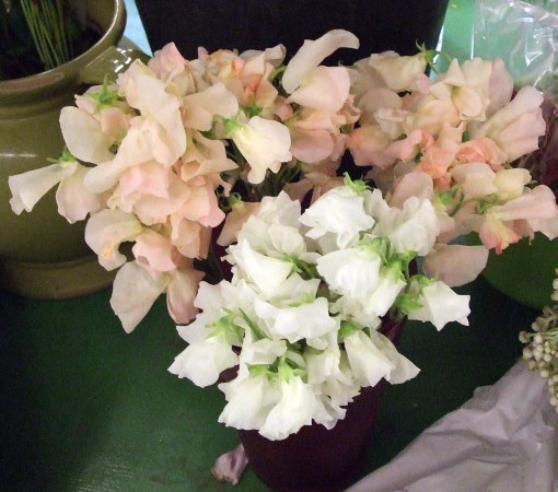 Sweet Peas at the Flower Market