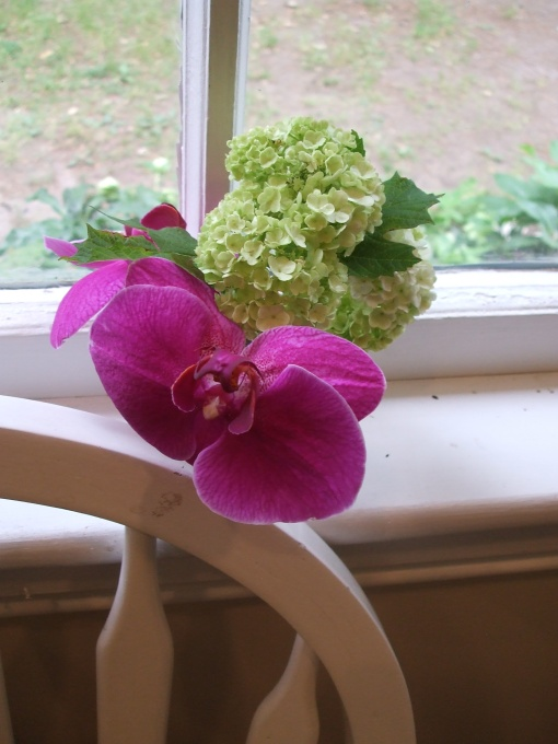 Studio Still Life: Orchid and Viburnum